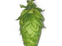 Huell Melon Ernte α-6 хмель оптом