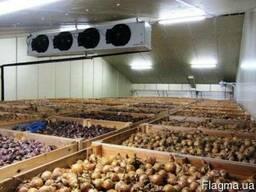 Холодильная камера для хранения овощей (овощехранилище).