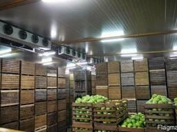 Холодильное оборудование для хранения капусты