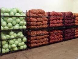 Холодильные камеры для хранения капусты