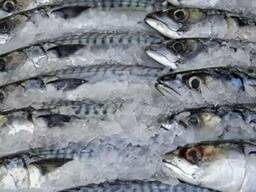 Холодильные камеры для рыбы и морепродуктов