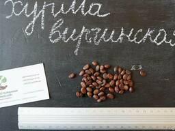 Хурма виргинская семена (10 штук) насіння
