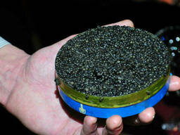 Икра черная осетра Премиум, натуральная, 100 грамм , ж/б
