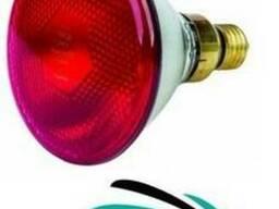 Инфракрасная лампа 175 Вт красная PAR (Польша)