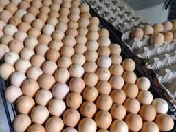 Инкубационное яйц бройлера, отправляем от 30 шт