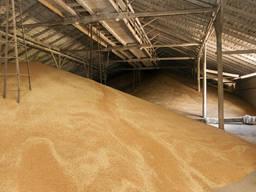 Нужен поставщик пшеницы 12, 5 прот. поставка в феврале