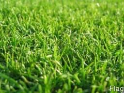 Искусственная трава для мультиспорта (Волейбол, Регби, Мини