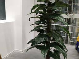 Искусственные растения, аренда искусственных растений