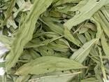 Иван чай (лист сухой) - фото 2