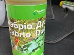 Кабріо® Дуо - фунгіцидний захист огірків, цибулі, томатів