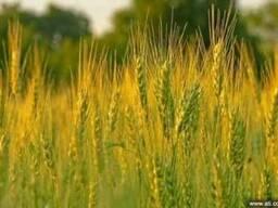 Качественная пшеничная мука, отруби