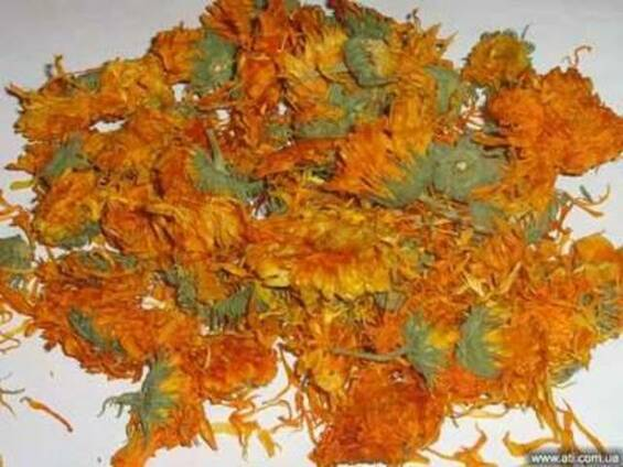 Календула цвет, календула лепестки