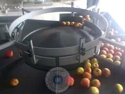 Калибратор для яблока по размеру 1500кг/час.