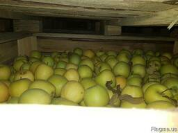 Камера хранения яблок