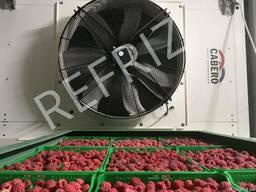 Заморозка ягод, фруктов, овощей Refriz под ключ