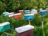 Карпатські бджоломатки - фото 1