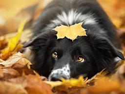 Картина по номерам мой милый пес моя собака друг.