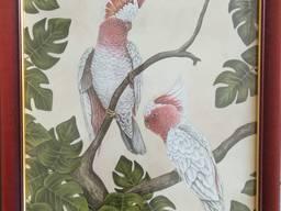 Картина репродукция Попугаи 47*57 см.