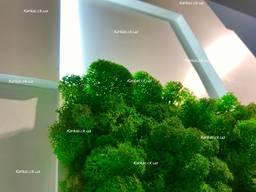 Картины и панно, декор из мха и стабилизированных растений