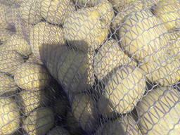 Картофель Беларусь