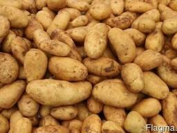 Картофель, лук репчатый, морковь