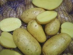 Картофель мытый Качество