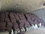 Картофель оптом из Беларуси от производителя, 4,5 грн. /кг. - фото 1