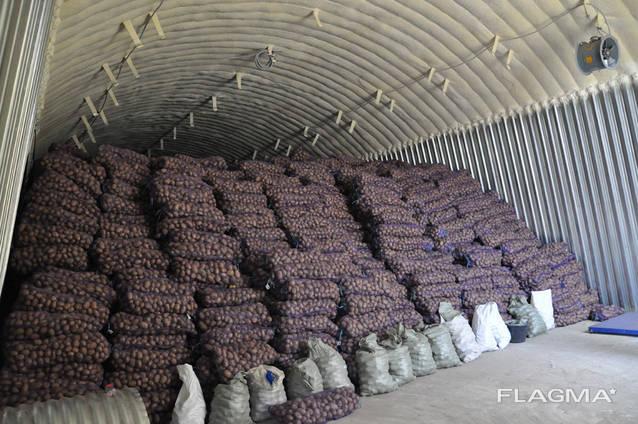 Картофель оптом из Беларуси от производителя, 4,5 грн. /кг.