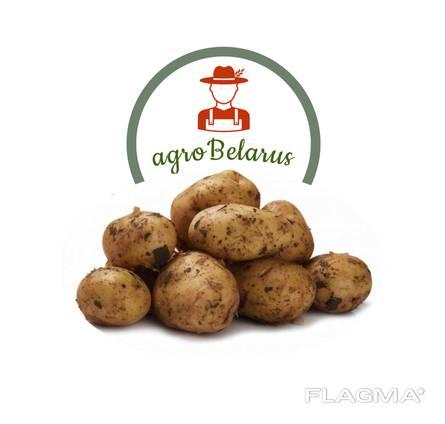 Картофель оптом из Беларуси.