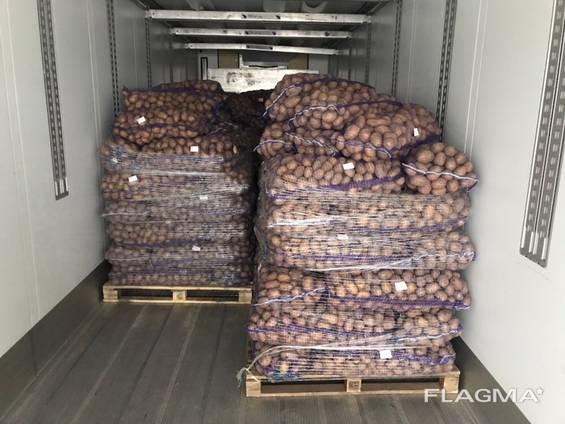 Картофель оптом из Беларуси (Export)