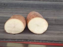 Картопля товарна 5 Розара урожаю 2019 р