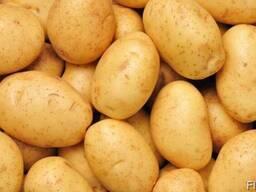 Картошка, картофель в Одессе