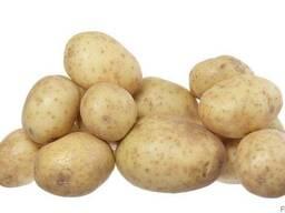 Картошка красивая средняя