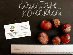 Каштан конский семена (10шт)для выращивания саженцев насіння