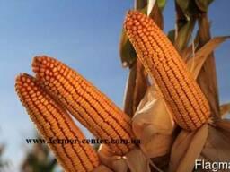 Кинемас кукуруза купить, Кинемас цена