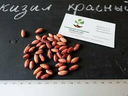 Кизил красный семена (10 штук) для выращивания саженцев - фото 3