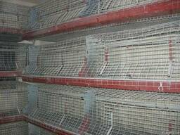Клетка для бройлеров на 100 голов с ниппельным поение