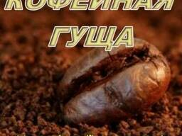 Кофейная гуща – уникальный стимулятор для развития грибницы