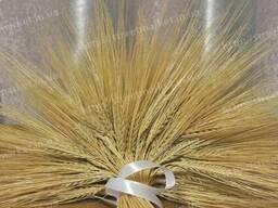 Колосья ячменя натуральные сухоцветы декор