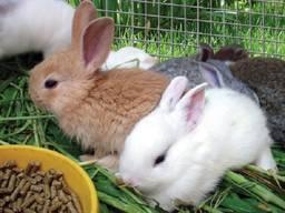 Комбикорм для кроликов от производителя