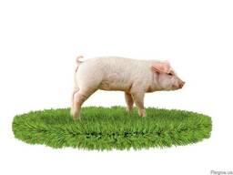 Комбикорм для свиней (СТ) престарт