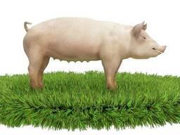 Комбикорм для свиней (СТ) старт