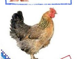 Комбикорм для домашней птицы ПК-2-5