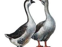 Комбикорм Старт для бройлеров, цыплят, уток, гусей