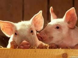 Комбикорма для бройлеров, курей, кролей свиней