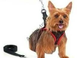Комфортный поводок для собак Comfy Control Harness - фото 1