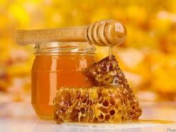 """Компания """"БИО ЛЕНД"""" закупает органический мёд"""