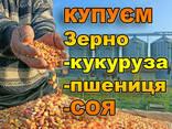 Компания покупает пшеницу. Всех классов - фото 2
