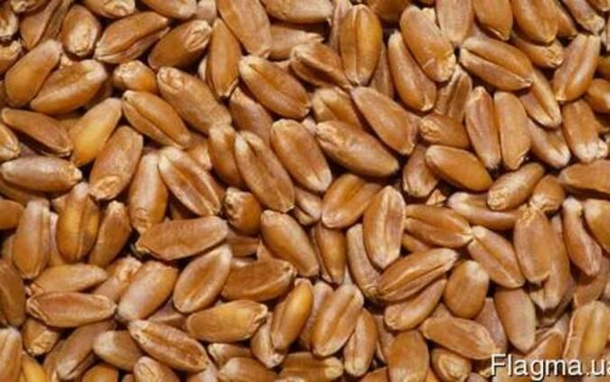 Пшеницу 2 ой , 3 ий