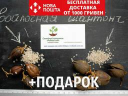 Комплект семян павловния войлочная (адамово дерево) +. ..